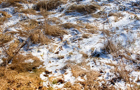 snowscene: the snow covering a ground with a yellow grass which was on it. spring Stock Photo