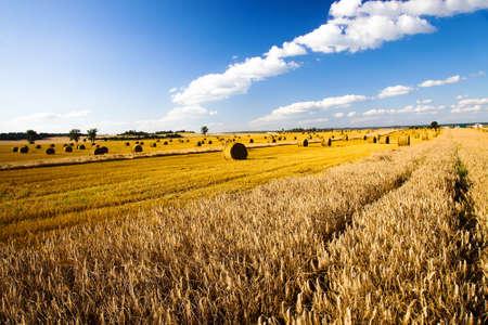 tillage: campo, en el que crece el grano durante la cosecha de la empresa