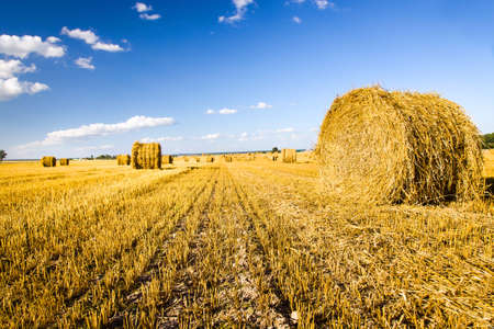 labranza: field, on which grow grain during harvest company