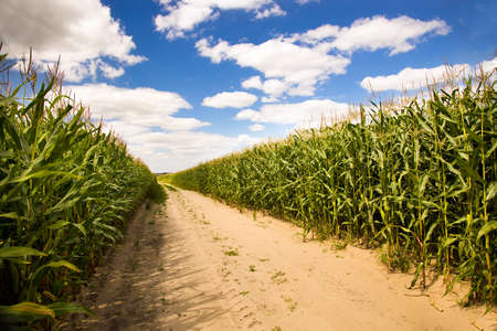 time of year: not paved rural road in the summer time year Stock Photo