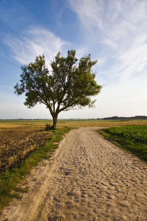 time of the year: rural road in the summer time year