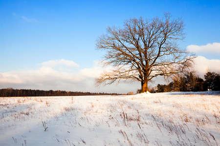 one tree growing in a field in a winter season