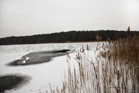 frozen lake: frozen lake where swans swim Stock Photo
