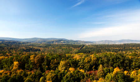 feuille arbre: la cime des arbres de la for�t en automne. Dans les montagnes de fond des Carpates.