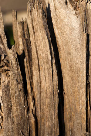 sprung: photographed close up cracked wood. old tree Stock Photo