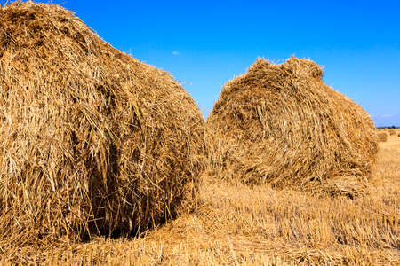 haycock: in a stack of twisted straw remains in the field after harvesting cereal
