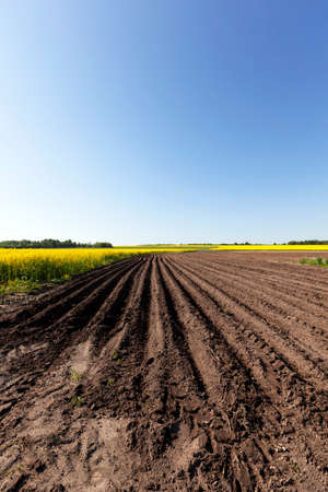 furrow: Agricultural field on which grow potatoes. furrow Stock Photo