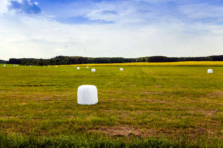 haycock: an agricultural field where the grass is harvested in the winter. bales of grass in cellophane