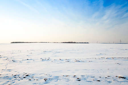 beautiful sunshine: photographed field covered with snow. winter season
