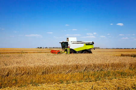 corn rows: Agricultural field on which works Harvester, harvested cereals