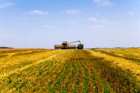 agriculture machinery: agricultural field  which made harvesting of cereals. summer.