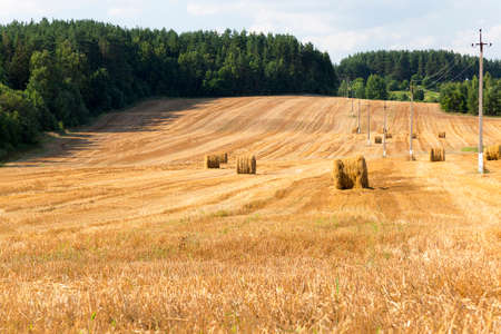 arable farming: agricultural field where harvest of cereals. arable farming