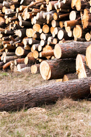 timber harvesting: photographed close up timber during timber harvesting