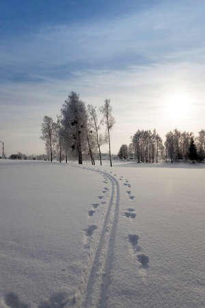 foliar: trees in winter . snow on the ground Stock Photo