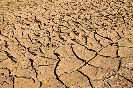 lack water: cracked earth due to lack of water the agricultural field, summer. Stock Photo