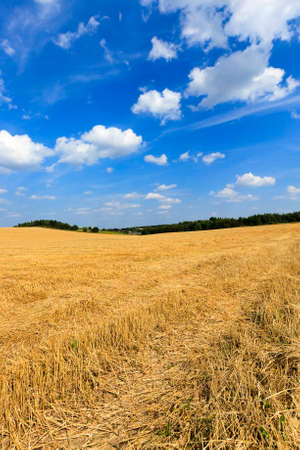 carried: agricultural field, which carried out the harvest of cereals