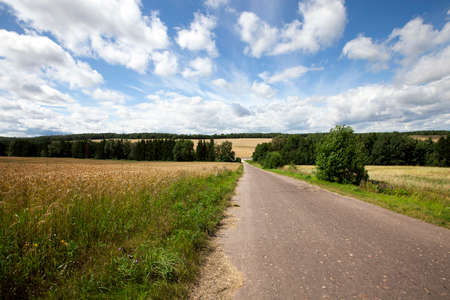 Rural asphalted road in the summer. road through the field
