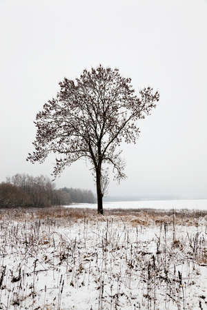 leafed: deciduous trees, photographed during the winter. snow on the ground Stock Photo