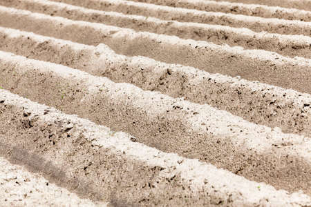 non cultivated land: photographed close up furrows in a potato field. Spring