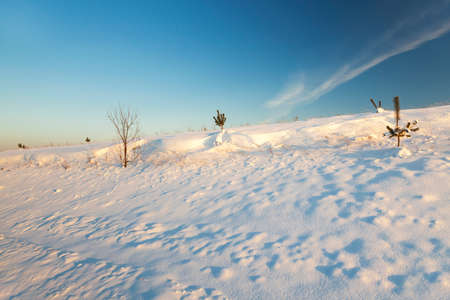 white winter: covered with white snow ,snow-covered, field in winter