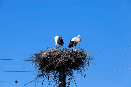 couple lit: photographed close-up of storks sit in the nest, blue sky