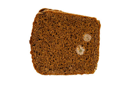 bread mold: photographed closeup isolated on a white background with black bread mold Stock Photo