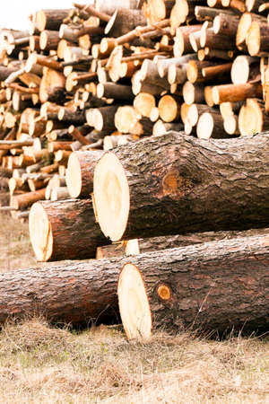 timber harvesting: photographed close up timber during timber harvesting