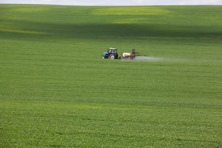 green agricultural field with cereals, which are processed by a tractor 스톡 콘텐츠