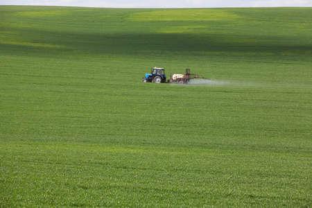 campo agrícola verde con cereales, que son procesadas por un tractor Foto de archivo