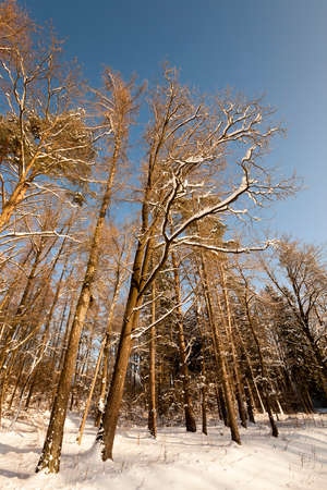 foliar: deciduous trees, photographed during the winter. snow on the ground Stock Photo