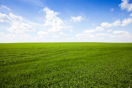 gramineous: Agricultural field on which grow the young grass. wheat