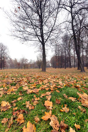provincial forest parks: a park in the autumn, during cloudy weather, late autumn,