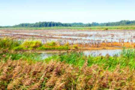 brackish water: photographed the territory in which is located the marsh, the end of the summer season, open space, defocus Stock Photo