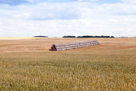 hayrick: agricultural field where crops harvested cereals, wheat