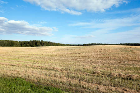 carried: an agricultural field, which carried out the rape harvest, summer, Stock Photo