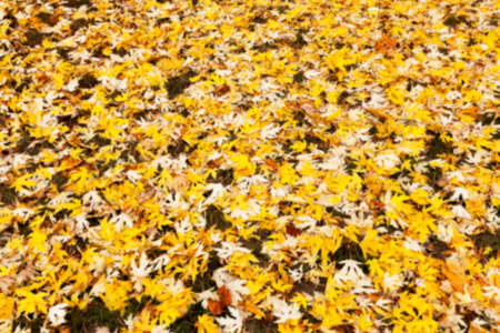 despondent: a park in the autumn, during cloudy weather, late autumn, defocused