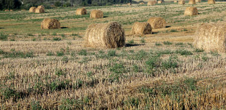 remained: an agricultural field, which remained Straw Haystacks after wheat harvest, Defocus