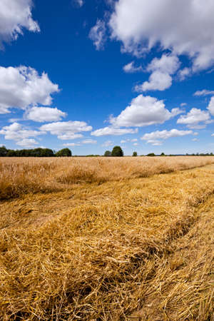 carried: an agricultural field on which harvesting is carried out Stock Photo