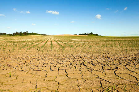 cracked earth due to lack of water on the field, where they grow corn. summer. Stock Photo