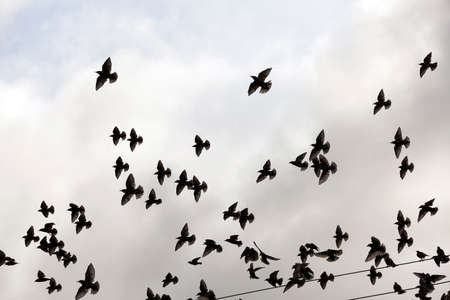 visible: photographed close-up blue sky, in which a flock of birds flying, visible silhouettes, daytime, clouds