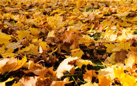 frondage: photographed close-up of yellowed foliage. autumn season. Stock Photo