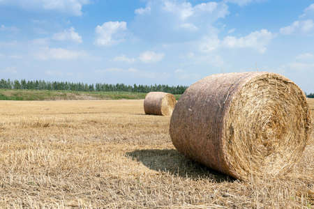 hayroll: Agricultural field on which is carried out harvesting cereals, wheat. stack of straw