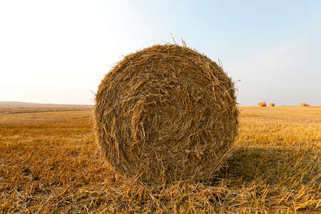 haymow: haystacks straw left after harvesting wheat, shallow depth of field