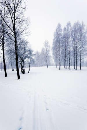 a small road in the winter season. winter. track.