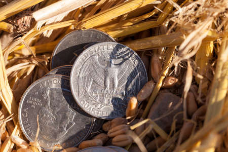 photographed close-up of an American coin in 25 cents in a pile of straw left after harvest Stock Photo