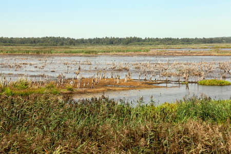 rushes: the territory on which there is a swamp, the summer season of the year end, Belarus