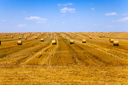 agricultural field, which collect ripe harvest of cereals
