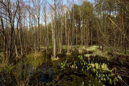 quagmire: photographed close-up of the swamp in the spring season Stock Photo