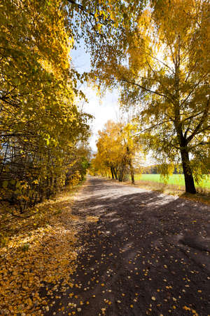 photographed close-up of yellowed and fell to the ground leaves of the trees, the sky and rural road,