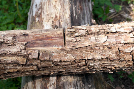 cleave: a small cut on the tree during its processing, focus on cutting, small dof